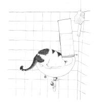 고양이와 세면대 / Ein Kater auf dem Waschbecken