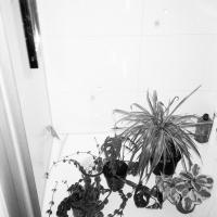 진공청소기와 거미집